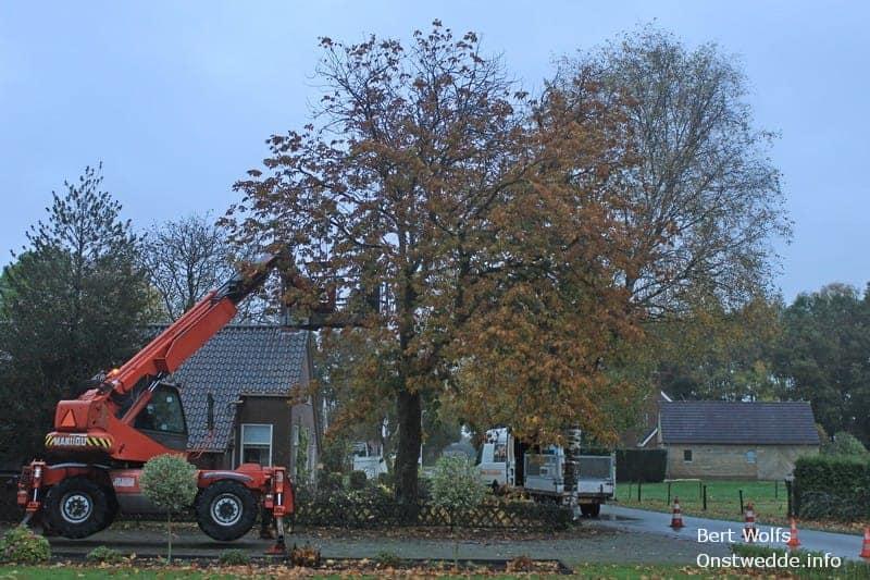 Kastanjeboom verwijderen